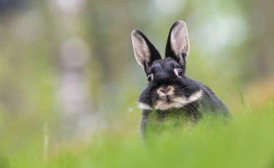 Cute bunny, hare, stare, animal, grass