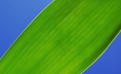 Green leaf, close up