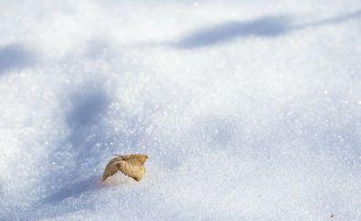 Dry leaf, winter, snow