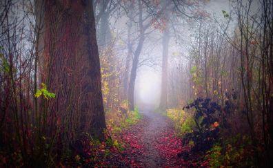 Beauty forest landscape
