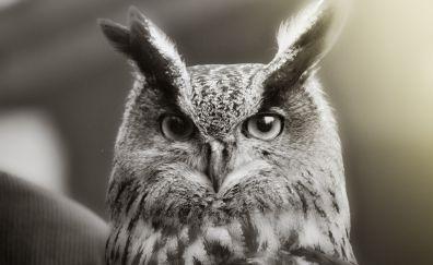 Owl muzzle, retro, close up