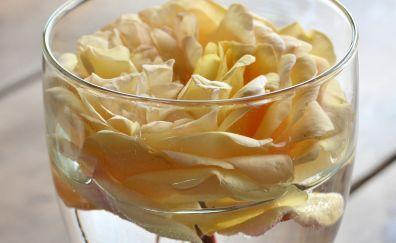 Rose flower in glass petals bud