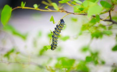 Caterpillar, larva, insect, leaves