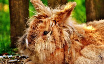 Wild, rabbit, furry animal, cute