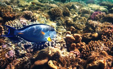 Tropical fishes, underwater, shells
