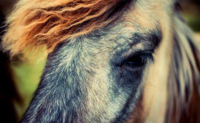 Pony, horse, muzzle, eyes