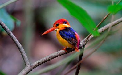 Beautiful bird, kingfisher, colorful bird