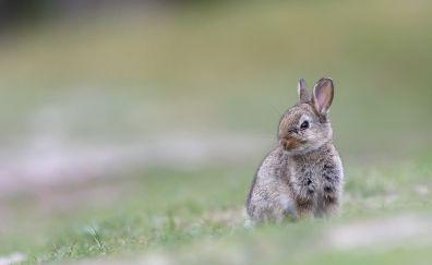 Cute, bunny, rabbit, animal