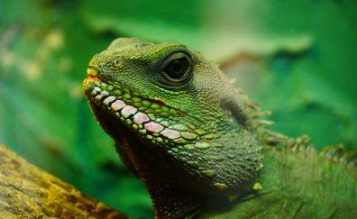 Muzzle, reptile, green lizard
