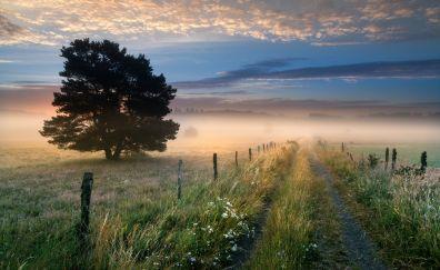 Fog, mist, landscape, tree, dirt road