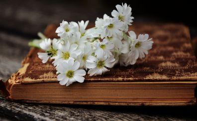 Book, white, wild flowers