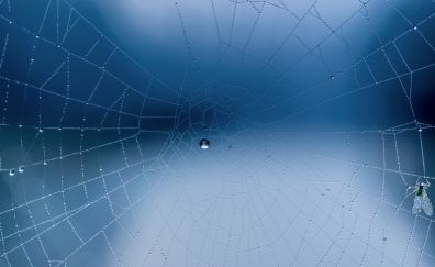 Spider web, close up, water drops