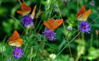 Orange butterfly, flowers, meadow, 4k