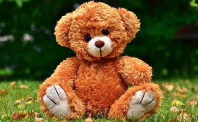 Teddy, cute toy, grass