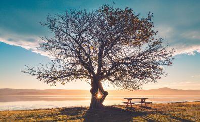 Huge tree, sunbeams, bench, sunlight, landscape, 5k
