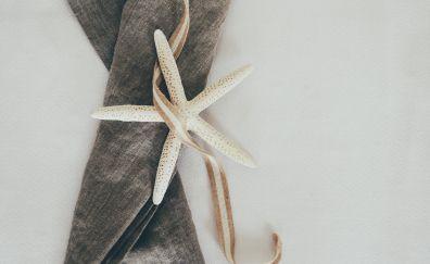 Starfish, ribbon, cloth