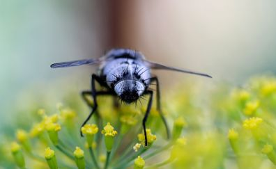 Fly insect, macro