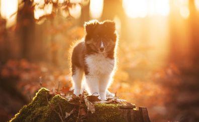 Cute puppy, sunlight