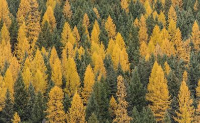 Forest, trees, autumn, aerial view