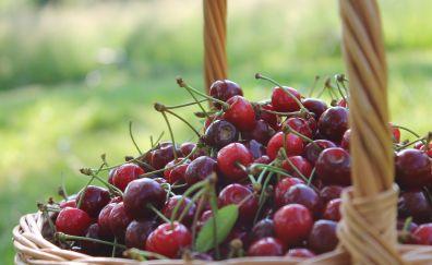 Cherries in basket, fruit