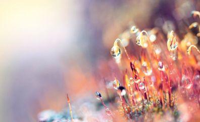 Dew drops on small plants wallpaper