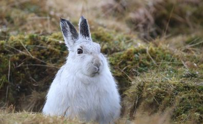 Cute rabbit animals