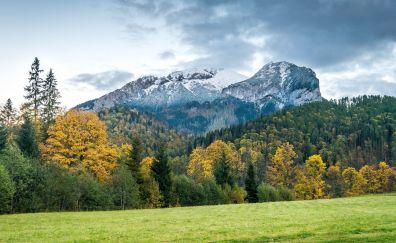 Belianske Tatras, mountains, tree, landscape