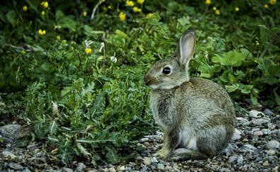 Cute, Hare, wild, animal, bunny