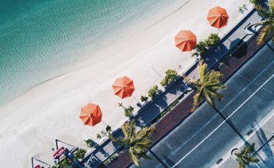 Beach, palm tree, aerial view, road