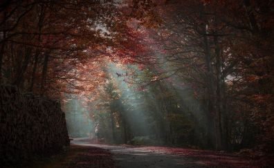 Red forest in fall nature