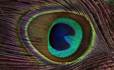 Peacock, feather, colorful, close up, 4k