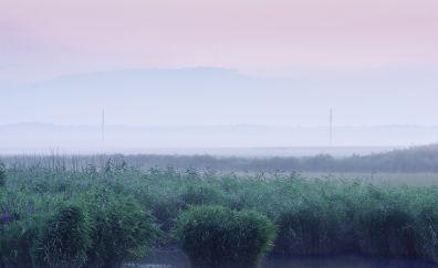 Dawn, morning, lawn, grass, lake, fog, horizon