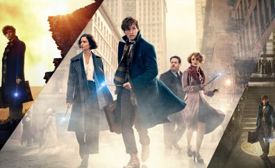 Fantastic Beasts and Where to Find Them, Eddie Redmayne, fantasy movie