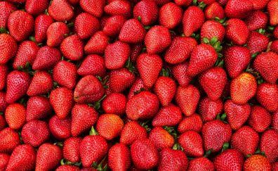 Strawberries, red fruits, berries, red, 4k