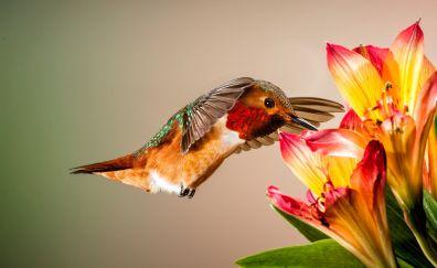 Close up, shot, flowers, hummingbird