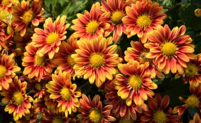 Beautiful, orange yellow flowers, spring, 5k