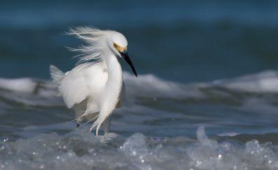 White Egret bird, foam