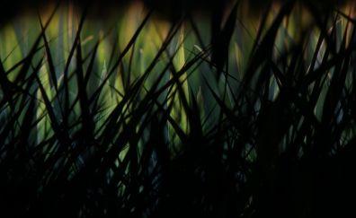Grass, dark, night, grass threads
