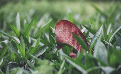Leaf in grass field, macro, grass