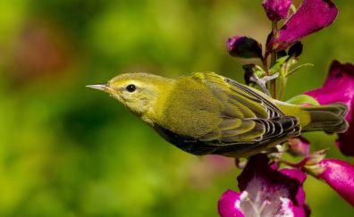 Flowers, green bird, warbler