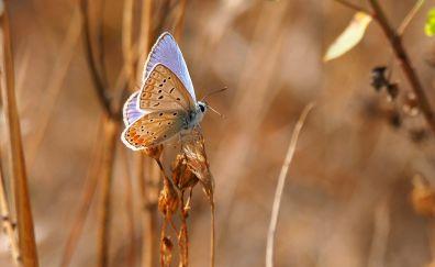 Nature, grass, blue butterfly