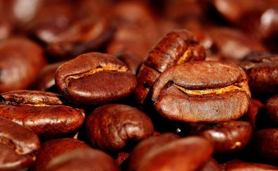 Roasted, seeds, coffee beans, seeds
