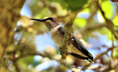 Cute, calm, bird, hummingbird sit