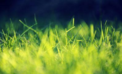Green grass, garden, close up