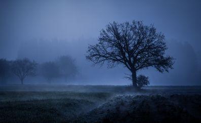 Tree, fog, landscape, night, autumn, 4k
