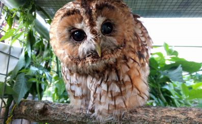 Cute, bird, owl, baby bird, stare