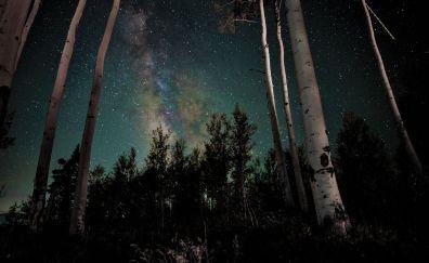 Stars, milky way, galaxy, night, tree, forest