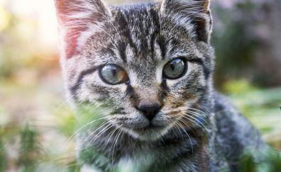 Cat, animal, muzzle, feline, pet animal, 4k
