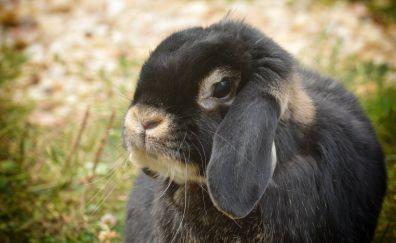 Cute bunny, rabbit, muzzle