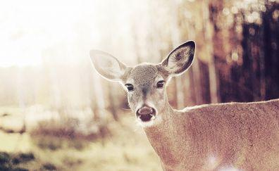 Cute wild deer bambi